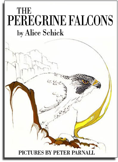 Peregrine Falcons_Nature Book_Alice Schick_Peter Parnall
