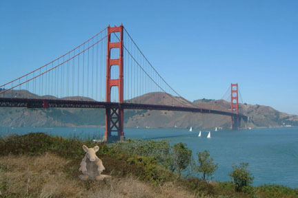 Armadillo_San Francisco_Golden Gate Bridge_Parody