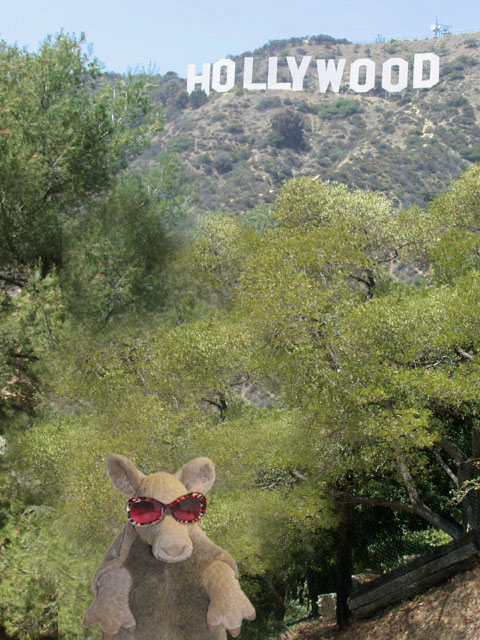 Armadillo_Hollywood_Hollywood Sign_Parody